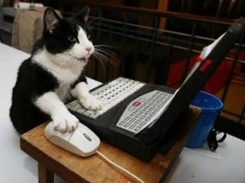 cat-typing